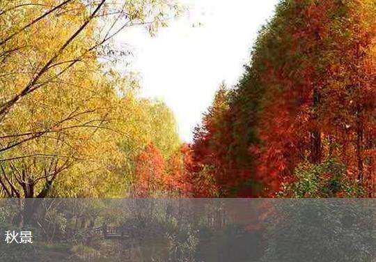 福寿园秋景