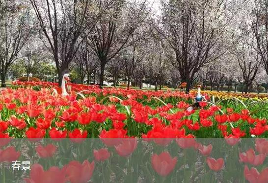 福寿园春景